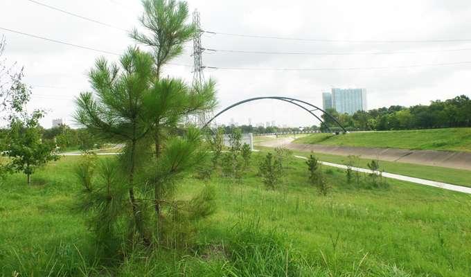 Trees Hermann Park Conservancy